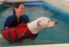 טיפול הידרותרפיה לכלבים